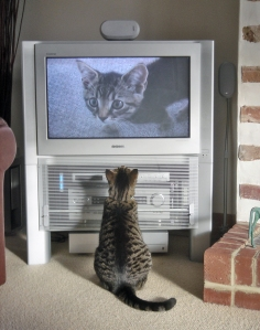 Fatty_watching_himself_on_TV