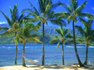 palm-trees2