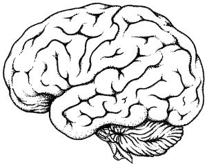 brain-only-2011
